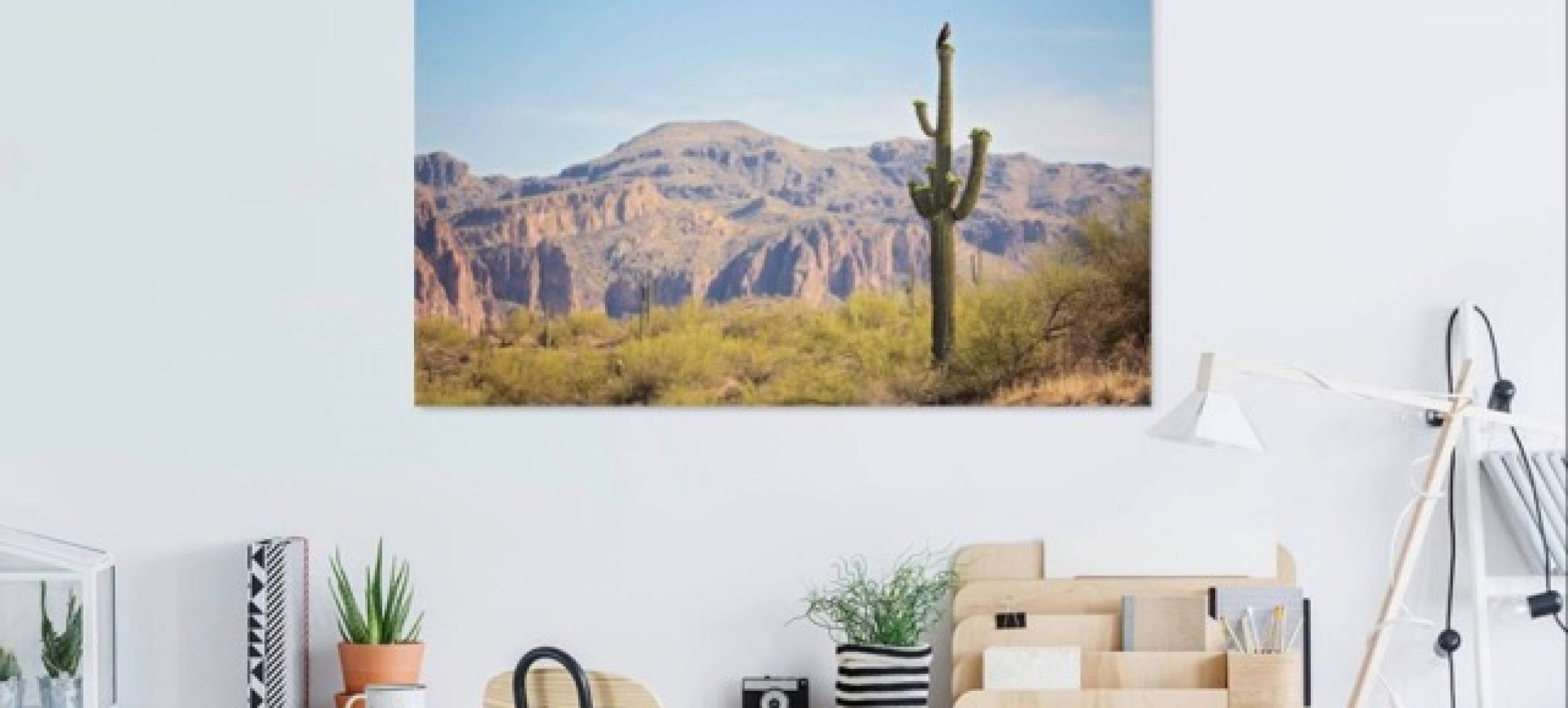 Discover the Saguaro Collection