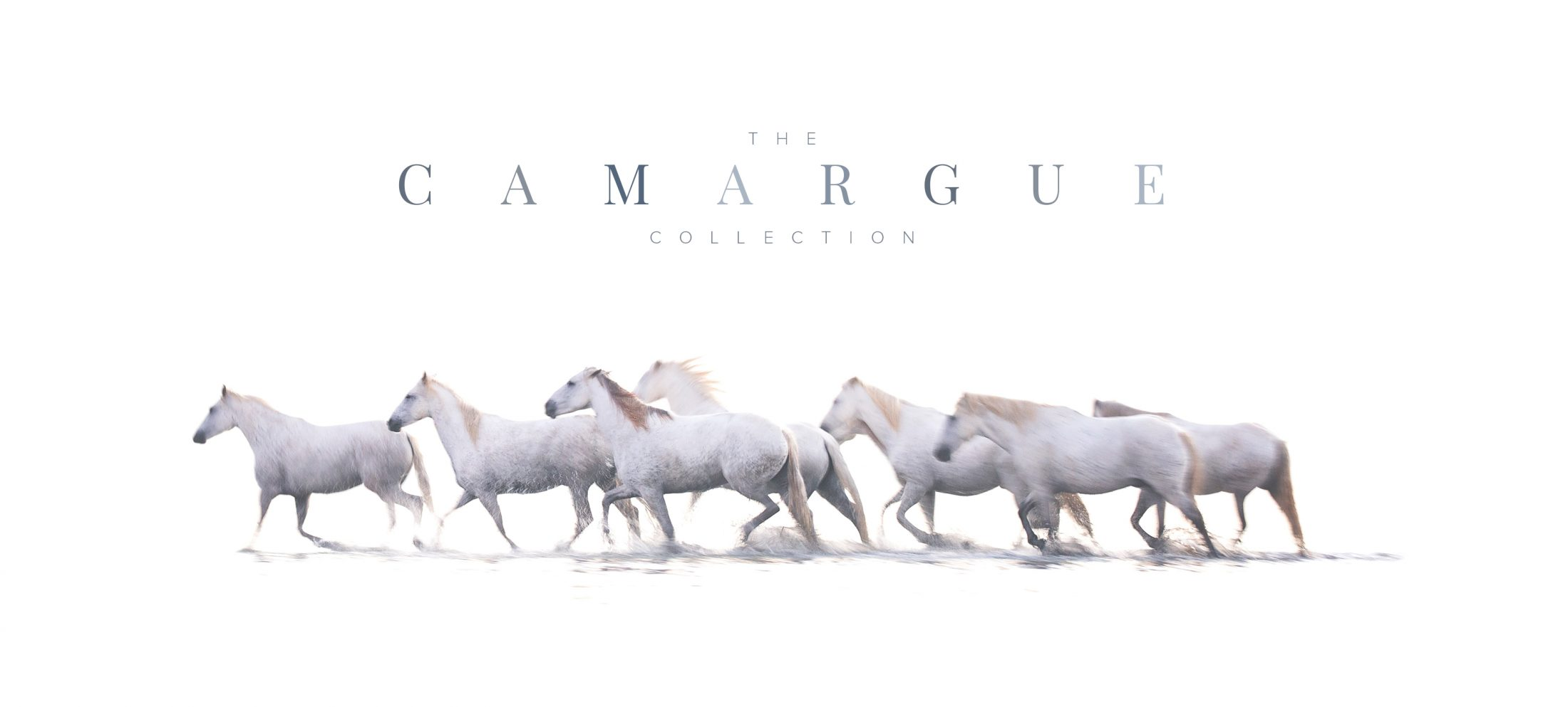 Latest Collection: La Camargue